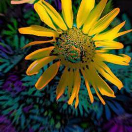 Nancy Bechtol Artwork sunflower blue, 2005 Other Photography, Floral