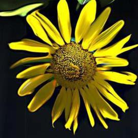 Nancy Bechtol Artwork sunflower painted, 2003 Other Photography, Floral
