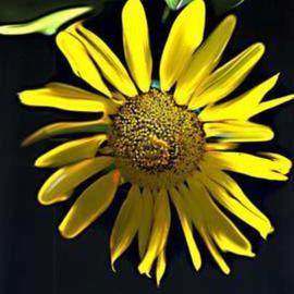 sunflower painted