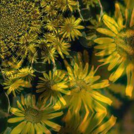 sunflower vortex