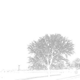 whitelineTrees