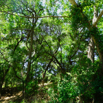 colorado bend summer By Nancy Wood