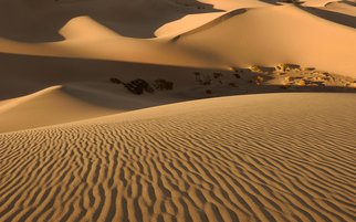 Dennis Chamberlain: 'Death Valley Sand Dunes', 2014 Color Photograph, Landscape.  Sand, dunes, desert, death valley, ripples, national park, California, golden,  ...