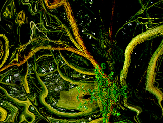Annette Labedzki Artwork BC Jungle, 2009 , Abstract