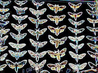 Annette Labedzki Artwork Glowing Butterflies, 2010 , Abstract