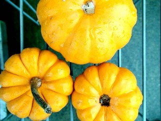 Color Photograph by Annette Labedzki titled: Pumpkin III, created in 2009