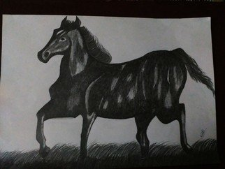 Nidhi Takur: 'pencil sketch', 2017 Pencil Drawing, Animals. Artist Description: horse...