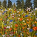 blazing flower meadow By Marilyn Domilski
