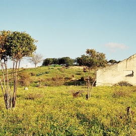 Orly Droval: 'orange tree ', 2001 Color Photograph, Landscape. Artist Description:   tree natur  ...