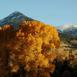 Obert Fittje: 'Golden Tree North of Yellowstone', 2005 Color Photograph, Seasons. Artist Description:  This is a photograph of a beautiful fall tree in a valley north of Yellowstone Park. ...