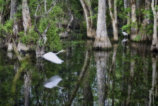 Stephen Robinson  'A Quiet Moment In The Big Cypres Preserve', created in 2012, Original Photography Digital.