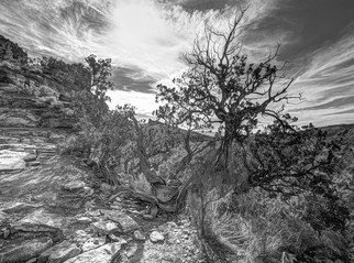 Stephen Robinson: 'The Mystical Tree', 2012 Black and White Photograph, Landscape. Magic is the way to describe the scene before me on the Cathedral Rock Trail in Sedona.  The tree lives beside the trail overlooking its majestic setting. ...