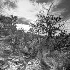 cathedral rock trail By Stephen Robinson