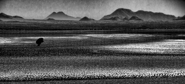 Stephen Robinson  'Low Tide On The Sea Of Cortez', created in 2011, Original Photography Digital.