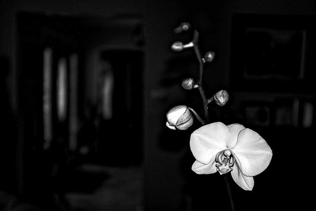 Stephen Robinson  'Orchid', created in 2018, Original Photography Digital.