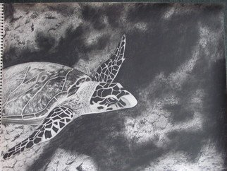 Katy Kerr Artwork Sea turtle on reef, 2010 Charcoal Drawing, Undecided