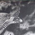 Sea turtle on reef By Katy Kerr