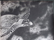 - artwork Sea_turtle_on_reef-1278403224.jpg - 2010, Drawing Charcoal, undecided
