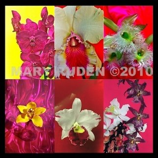 Mary Ruden: 'Crush', 2010 Color Photograph, Nature. Artist Description:     Photo of actual  orchids. Photos can be made any size, on many types of surfaces: vinyl, papers, backlit film.    ...