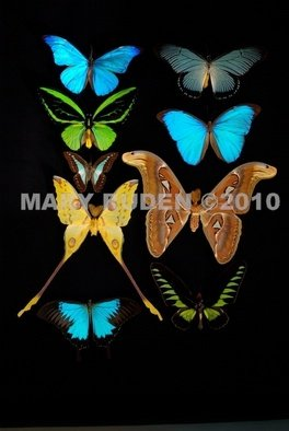Mary Ruden: 'Dura', 2010 Color Photograph, Nature. Artist Description:   Photo of actual  butterflies. Photos can be made any size, on many types of surfaces: vinyl, papers, backlit film.  ...