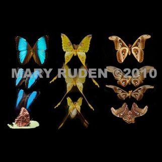 Mary Ruden: 'Metamorphosis Trio', 2010 Color Photograph, Nature. Artist Description:      Photo of actual moths/ butterflies and their actual cocoons. Photos can be made any size, on many types of surfaces: vinyl, papers, backlit film.     ...