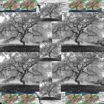 Tree Collage, Series 1, Margie Bates