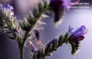 Artist: Pamela Henry - Title: Purple Haze - Medium: Color Photograph - Year: 1994