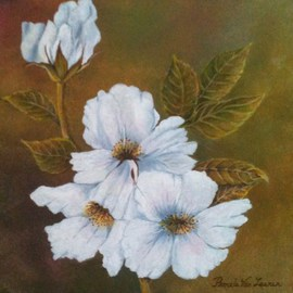 Pamela Van Laanen: 'Rock Roses', 2012 Acrylic Painting, Floral. Artist Description:  Paper white rock roses painted on a softly blended, mottled background                  ...