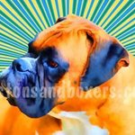 Boxer Pop Art, Patti Meador