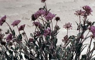 Artist: Paula Durbin - Title: Alien Flowers - Medium: Color Photograph - Year: 2000