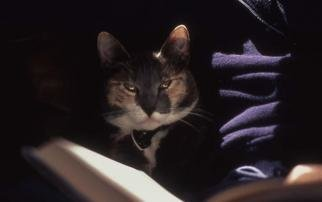 Paula Durbin: 'Angel', 2002 Color Photograph, Cats. A Fresson print. May be printed in other sizes and processes....