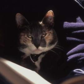 Paula Durbin: 'Angel', 2002 Color Photograph, Cats. Artist Description: A Fresson print. May be printed in other sizes and processes....