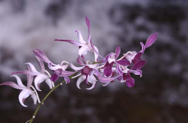 Paula Durbin  'Orchid Spray', created in 2004, Original Photography Color.
