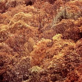 Paula Durbin: 'Smoky Mountains', 2001 Color Photograph, Landscape. Artist Description: Fresson Print.  May be printed in other sizes and processes. ...