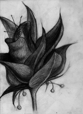 Paul Anton Artwork Missed Flower, 2014 Pencil Drawing, Floral