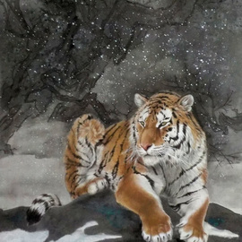 tiger of the winter