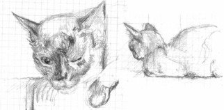 Fred Brawner: 'siamcat', 2018 Graphite Drawing, Animals. Sketch of a cat...