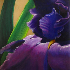 Purple Velvet Iris