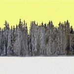 Forest Yellow By Philip Smeeton