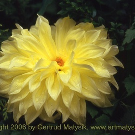 Gertrud Matysik Artwork motive from flora 0060, 2006 Color Photograph, Floral