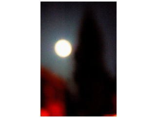 Artist: Marilyn Nosewicz - Title: Moon Tree Color Photograph - Medium: Color Photograph - Year: 2012