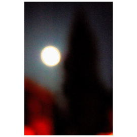 Marilyn Nosewicz Artwork Moon Tree Color Photograph, 2012 Color Photograph, Landscape