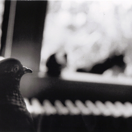Marilyn Nosewicz Artwork Pigeons sitting in summer window Black And White Photograph Window, 2012 Black and White Photograph, Birds