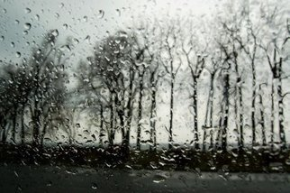 Marilyn Nosewicz Artwork Spring Rain Trees Black And White Photograph, 2010 Black and White Photograph, Abstract Landscape