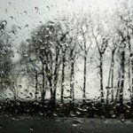 Spring Rain Trees Black And White Photograph, Marilyn Nosewicz