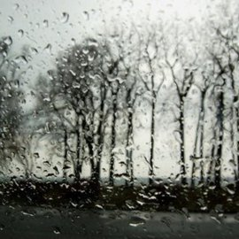 Marilyn Nosewicz: 'Spring Rain Trees Black And White Photograph', 2010 Black and White Photograph, Abstract Landscape. Artist Description:      For The past decade I have been photographing this set of Trees all seasons, all weather. Again Photographed in the spring looking through a train drop window, my Trees. Black and White Photograph. Please Email Me for any questions.     ...