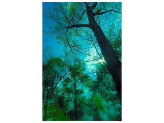 Marilyn Nosewicz Artwork Tree After Rainstorm Bue Green Color Digital Photograph, 2011 Other Photography, Trees