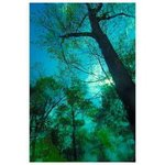 Tree After Rainstorm Bue Green Color Digital Photograph, Marilyn Nosewicz