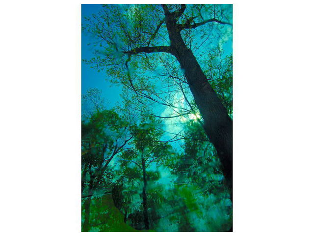 Marilyn Nosewicz  'Tree After Rainstorm Bue Green Color Digital Photograph', created in 2011, Original Printmaking Giclee - Open Edition.