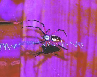Artist: C. A. Hoffman - Title: Arachnid Art II Me and My Shadow - Medium: Color Photograph - Year: 2009